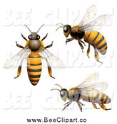 Vector Clip Art of 3d Honey Bees from Various Views by Merlinul