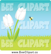 Vector Clip Art of a Bee Around White Spring Tulip Flowers by Amanda Kate