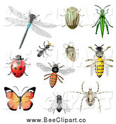 Vector Clip Art of a Dragonfly, Beetles, Ant, Bees, Grasshopper, Ladybug and Butterfly by Vectorace