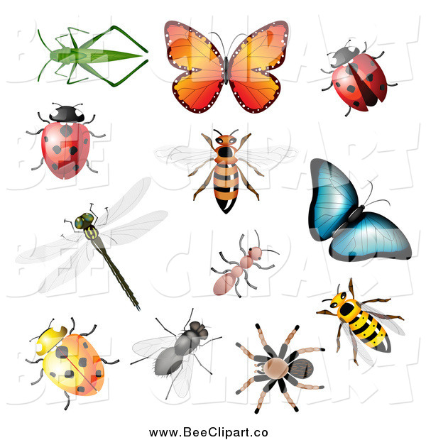 Vector Clip Art of 3d Insects and Bugs