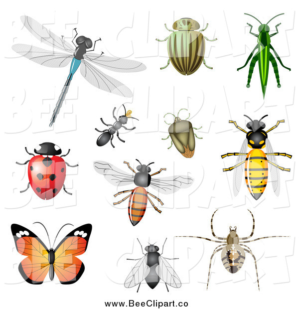 Vector Clip Art of a Dragonfly, Beetles, Ant, Bees, Grasshopper, Ladybug and Butterfly