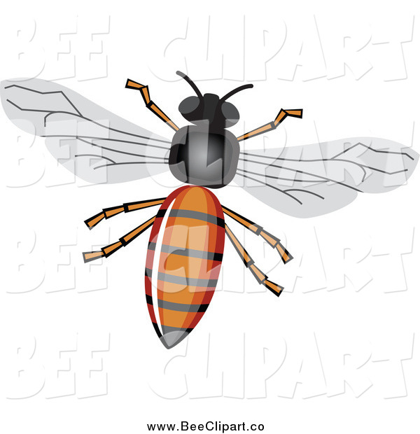 Vector Clip Art of a Honey Bee with a Shiny Body