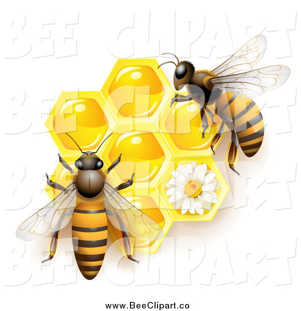 Vector Clip Art of Bees over Honeycombs